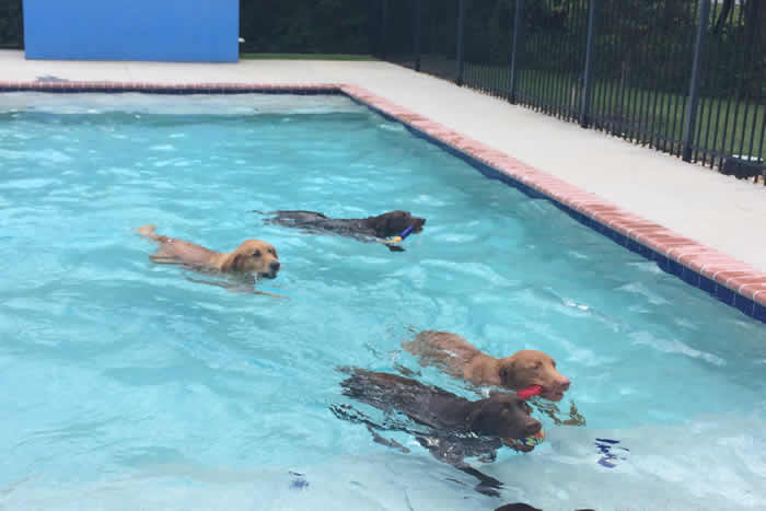 pool-four-dogs700px